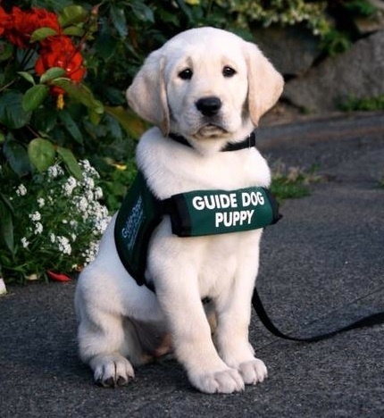 A lezione di leadership dal cane guida